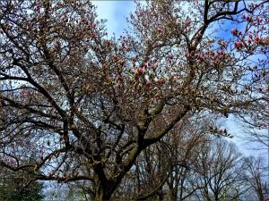 Tree_1b